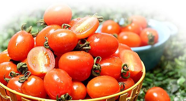 [이띠기 농장] 대추방울 토마토 2kg (3-4번과)