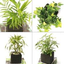 [챠콜큐빅] 공기정화식물 4종