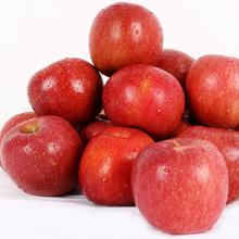 경북 의성 사과 흠과 10kg(40~50과)