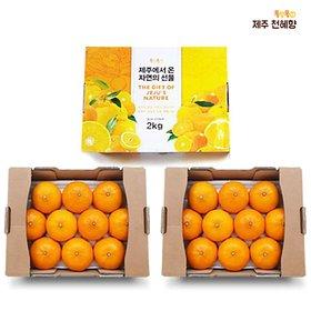 제주 천혜향 1+1+1세트 (총 3박스, 6kg)