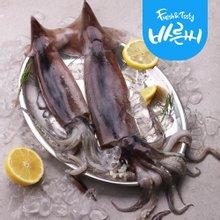 [바른씨]선동 오징어 대 2마리 700g