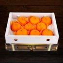 [과일예찬] 제주 천혜향 3kg (15과내)