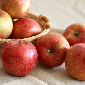 [열매나무] 경남 거창 흠집 사과 2.5kg [가정용/기스과]