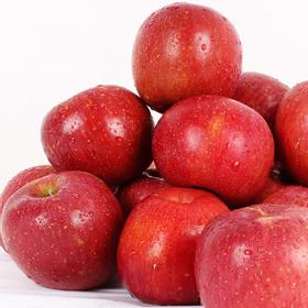 [이슬마루] 경북의성 사과 (흠과) 3kg(15~20과)