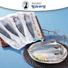 [탐라바당]제주 고등어살(중) 2kg