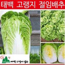 ※[태백고랭지김치] 태백 고랭지 절임배추20kg※