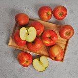 국내산 햇 사과 부사 10kg 가정용